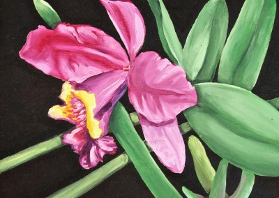 Purple Orchid, 8 x 10